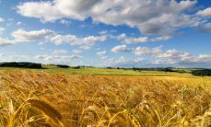 Аграрный вопрос в политике РСДРП